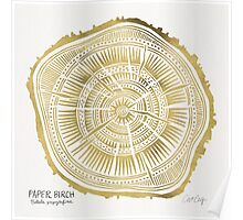 Paper Birch – Gold Tree Rings Poster