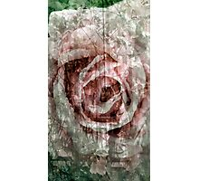 Rose Collage Photographic Print