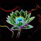 Bright Water Lillie  by NewfieKeith