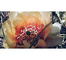 Cactus Flower Photographic Print