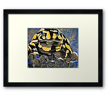 Precious - A Corroboree Frog Guarding Eggs by Heather Holland Framed Print