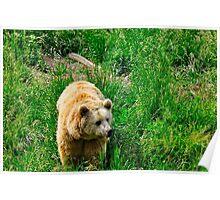 Rexburg Idaho - Bear Watch Poster