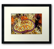 Blueberry pancake Framed Print
