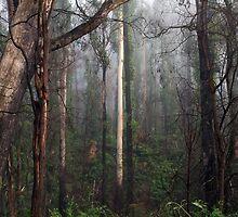 Misty Kinglake West Morning by Dean Osborne