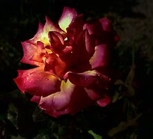 Rose in the dark by Anne  RENARD