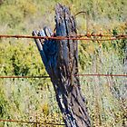 The fence by indiafrank
