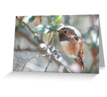 Allen's Hummingbird (Selasphorus sasin) Greeting Card