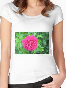 Pink rose close up and green leaves. Women's Fitted Scoop T-Shirt