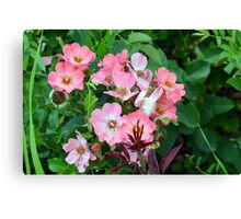 Small pale pink flowers and green leaves. Canvas Print