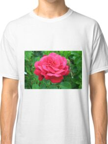 Pink rose close up and green leaves. Classic T-Shirt