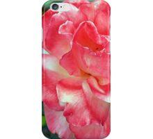 Macro on beautiful pink flower in the garden. iPhone Case/Skin