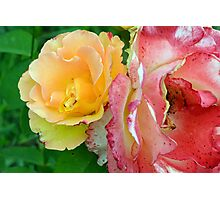 Yellow and pink flowers background. Photographic Print