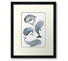 dancing whales Framed Print