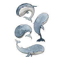 dancing whales Photographic Print