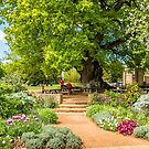 Under the Old Oak Tree by vivsworld