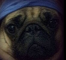 Stanny Pug by LadyThor