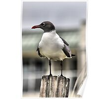 Gull on a post Poster