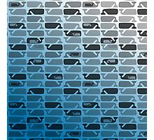 Ombre Whales Photographic Print