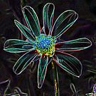 Wind Mill Dahlia In Neon by NewfieKeith
