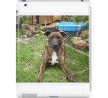 Alert Staffy iPad Case/Skin