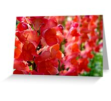 Tower Of Red Petals Greeting Card