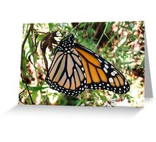 Monarch Queen Greeting Card