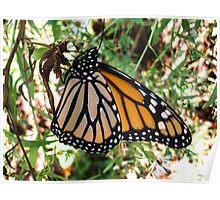 Monarch Queen Poster