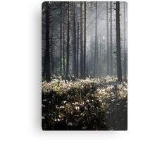 9.6.2014: Wild Rosemary Flowers in Forest Metal Print