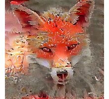 Sly Red Fox  Photographic Print