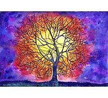 Tree of new life Photographic Print