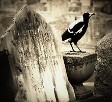 Life in the Graveyard. by Jeanette Varcoe.