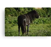 Hairy Horse Canvas Print