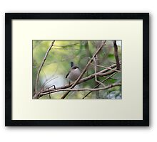 Fairy wren - Female Framed Print