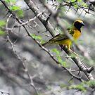 The Weaver Bird by Maartje de Nie
