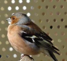 Bird on the fence Sticker