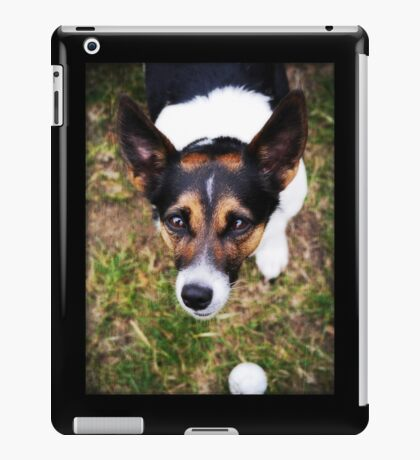 Jessie the Jack Russell Terrier: It's All About the Ball iPad Case/Skin
