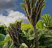 Giant Rhubarb by John Thurgood