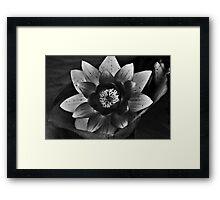 The Black Lotus Framed Print