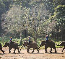 Endless Elephants by BonnieSanan