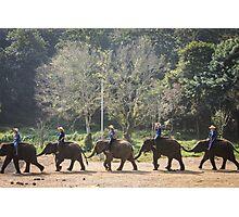 Endless Elephants Photographic Print