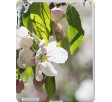 White blossoms on an ornamental tree iPad Case/Skin