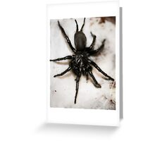 Macrothele calpeiana Greeting Card