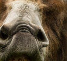 Smiling Donkey Sticker