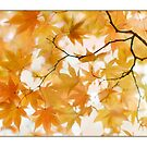 Apricot Maple Leaves by AlysonArtShop
