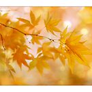 Peachy Autumn Leaves by AlysonArtShop