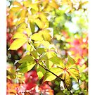 Autumn Virginia Creeper by AlysonArtShop