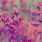 Endless Beauty On the Meadow II by LenkaOBS