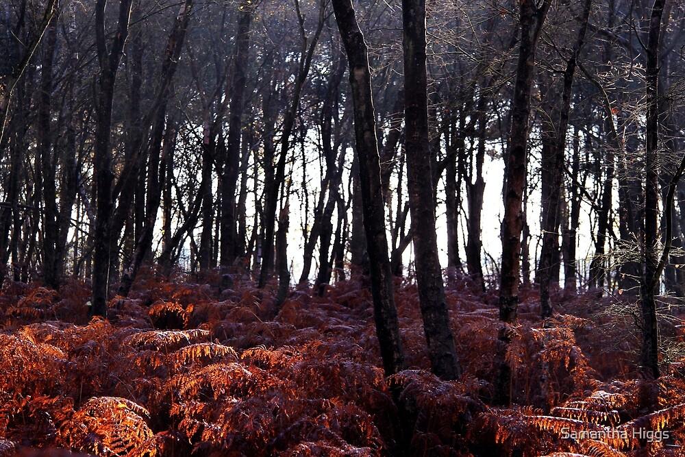 Autumn Morning - Bucklebury by Samantha Higgs