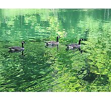 Floaters Photographic Print