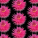 Pink Dahlia by Artberry